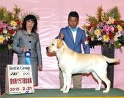 2015年2月21日 リッチ G1 レディ BOB ピコ ウィナーズ 愛知県クラブ連合会展