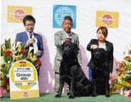 2015年3月22日 ケニーG4 レディG4 FCI北関東インターナショナルドッグショー