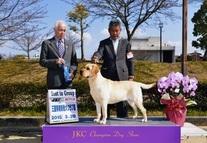 2015年3月28日 イージスG3 ピコG1 三重県南勢愛犬クラブ展