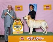 2015年4月4日 アローAOM リッチBOB FCIジャパンインターナショナルドッグショー