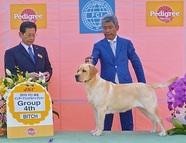 2015年10月4日 ピコG4 FCI埼玉インターナショナルドッグショー