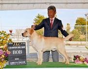 2016年3月20日 ブラフBOB リンダBOB  兵庫県クラブ連合会展