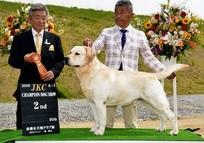 2016年5月7日 ハマーG2 倉敷全犬種クラブ展