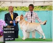 2016年6月4日 ハマーG1 倉敷愛犬クラブ展