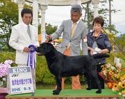 2015年9月5日 ケニーKING レディG2 金沢全犬種クラブ展