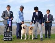 2016年9月10日 ハマーR.KING リンダG1 徳島西部愛犬クラブ展