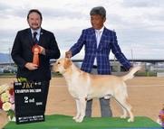 2016年9月17日 ブラフG2 神戸三木ファミリー愛犬クラブ展