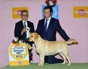 2016年11月27日 ハマーAOM リンダAOM ピコG4 ラスキーG3 ペペブルドッグ単独・BOB オールブリードG1 FCI大阪インターナショナルドッグショー