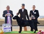 2017年1月28日 ラスキーBIS リンダBOB 沼津愛犬クラブ展