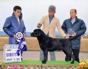 2017年1月29日 ラスキーBIS 志太愛犬クラブ展