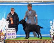 2017年2月11日 キラ G2 和歌山伏虎全犬種クラブ展