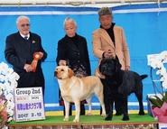 2017年2月12日 リンダG2 ラスキーG2 和歌山愛犬クラブ展