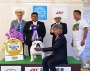 2017年4月16日 ぺぺR・KING ラスキーG2 リンダAOM FCI四国インターナショナルドッグショー
