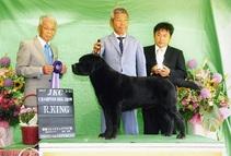 2017年5月21日 ラスキーR・KING リンダG2 徳島フレンドドッグクラブ展