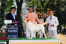 2017年5月4日 リンダR・QUEEN ラスキーG2  バロンP・R・KING 高松エレガンス愛犬クラブ展