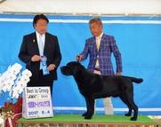 2017年6月4日 ラスキーG1 リンダG2 大阪西部オールケネルクラブ展