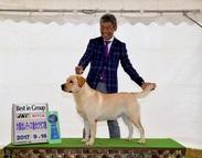 2017年9月16日 リンダG1 ブラフG2 大阪北レディス愛犬クラブ展