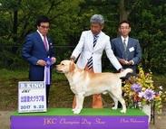 2017年9月23日 リンダR-KING 出雲愛犬クラブ展