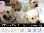 2013.3.14 生 アローXエイミ