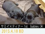 2015.4.18 生 サミイXティナー